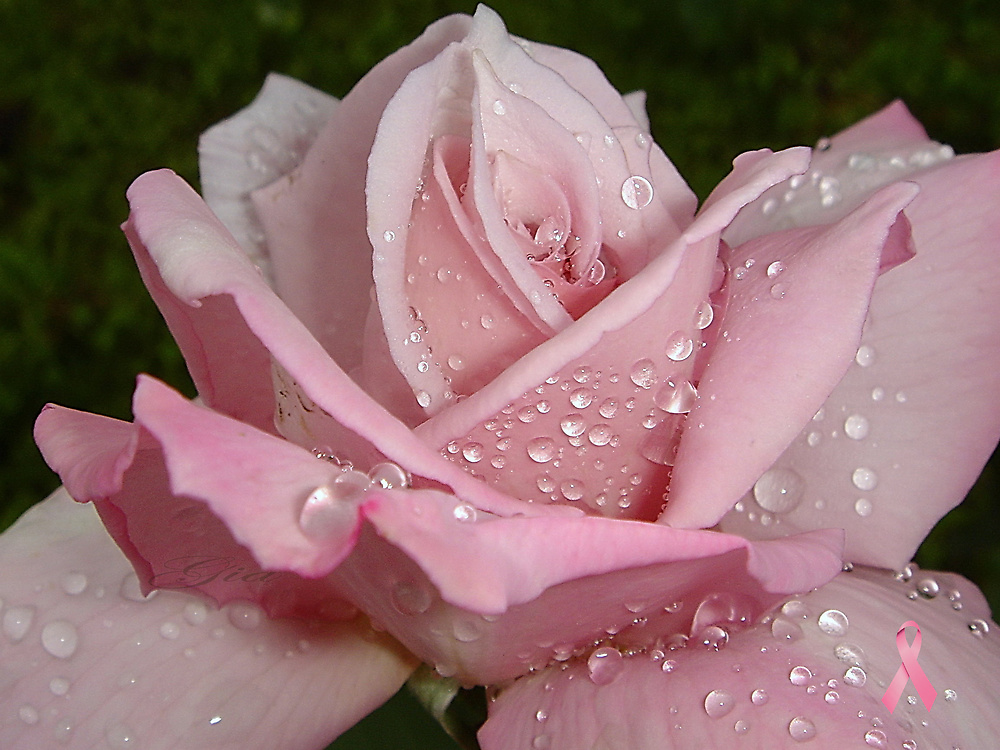 """""""Kissed By The Rain"""" by Gail Jones"""