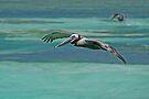 Pelican in Flight 3 by Leon Heyns