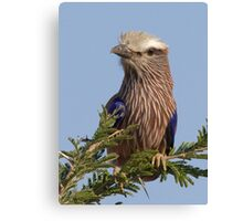 Purple Roller Canvas Print