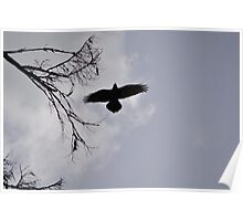 Crow backlit Poster