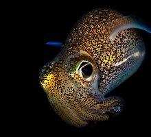 Bobtail Squid by MattTworkowski