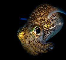 Bobtail Squid by MattTworkowski