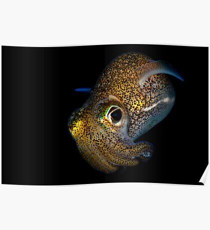 Bobtail Squid Poster