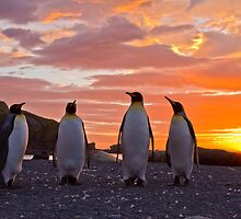 A Sunrise Fit for Kings by Michael S Nolan