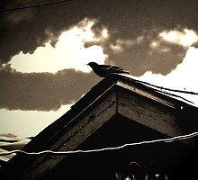 Bird on My Garage by Lenore Senior