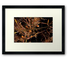 Wide Bodied Pipefish Framed Print
