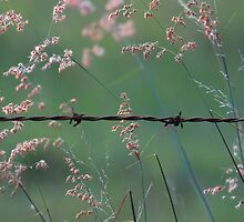 Weeds and Wire. by Barbara Harris