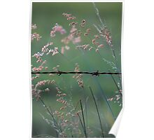 Weeds and Wire. Poster