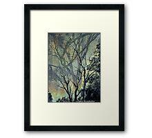 Trees 2 Framed Print