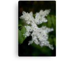 Whiteness Canvas Print