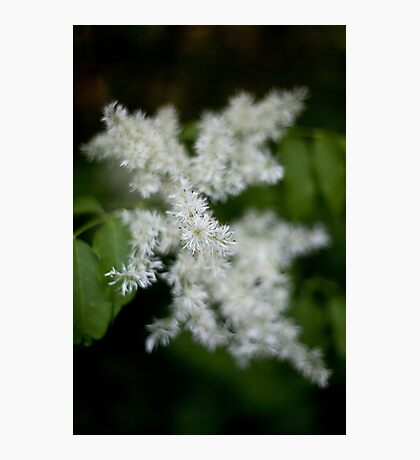 Whiteness Photographic Print