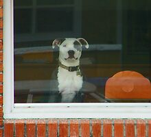 Doggie in the Window by Lenore Senior