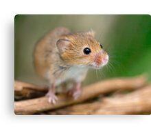 Happy Harvest Mouse Canvas Print