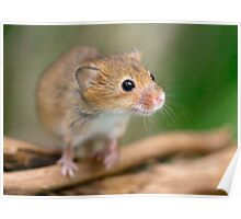 Happy Harvest Mouse Poster
