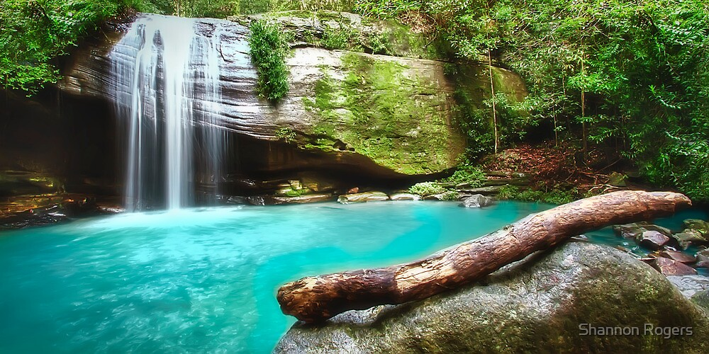 Buderim Waterfall by Shannon Rogers