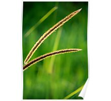 The green, green grass of home Poster