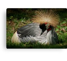 GREY CROWNED CRANE (Balearica regulorum) Canvas Print