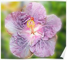 Mauve Hibiscus Poster