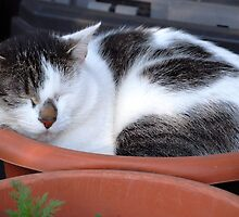 What Strange Plant is Growing in that Pot??? by vbk70