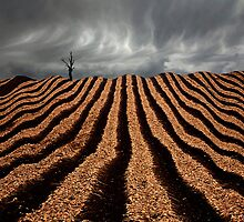 Onion Field - Tasmania by Hans Kawitzki