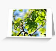 Fresh New Birch Leaf Greeting Card