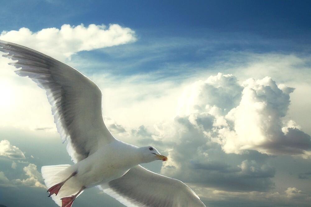 Freedom Of The Sky... by Carol Knudsen