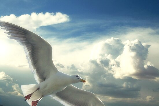 Freedom Of The Sky... by Carol Knudsen