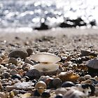 little shells by Steven Guy