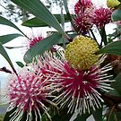 Spikey Spheres by DEB CAMERON