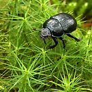 Mr Beetle by Mark Hughes