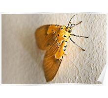 Specious Tiger Moth Poster
