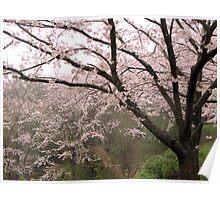 Cherry Tree in Rain #2 Poster