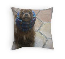 Horatio Staring at Me Throw Pillow