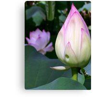 Lotus Bud Canvas Print