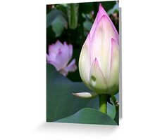 Lotus Bud Greeting Card