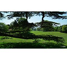 England,s Greenery Photographic Print
