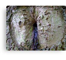 Funny tree bark Canvas Print