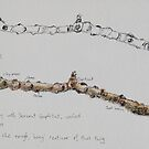Two Studies of a Twig by Geraldine M Leahy