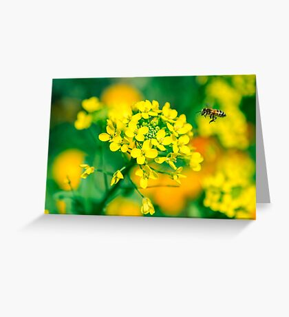 Yellow flower and the bee Greeting Card