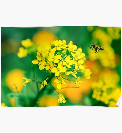 Yellow flower and the bee Poster