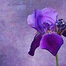 Fleur-de-lis by PhotosByHealy
