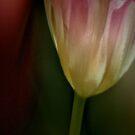 Tulip II by Mary Ann Reilly