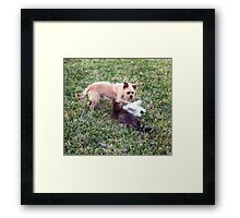 Playing in the sunshine with friends Framed Print