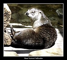 North American River Otter Photographic Print