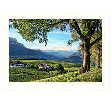 Italian Vineyards Art Print