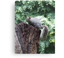 Squirrel on a tree stump Canvas Print