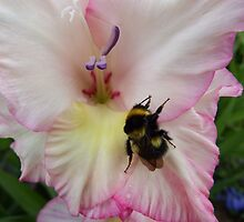 Struggling Bee by DEB VINCENT