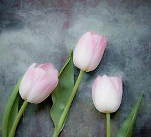 Three Tulips by Maria Heyens