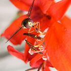 Honey Bee in red:) by LisaBeth