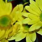 Yellow Beauties by HeavenOnEarth